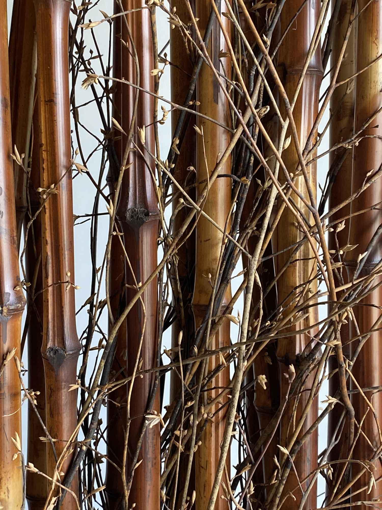 竹って美しい-竹之助